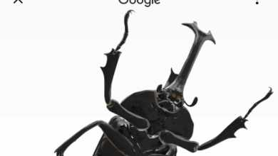 Photo of Nuevos insectos se unen a los animales 3D de Google